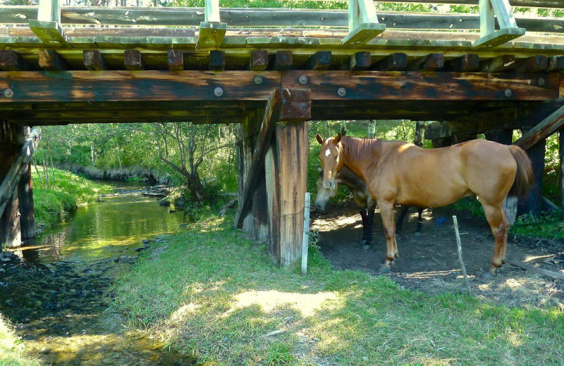 Horses by the creek at Newton Fork Ranch.