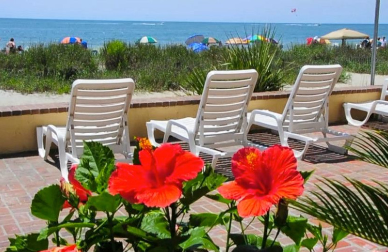 Beach View With Lounge Chairs at Sea Mist Oceanfront Resort