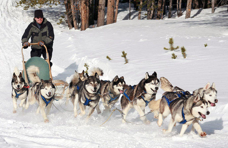 Dog sledding at Beaver Run Resort.
