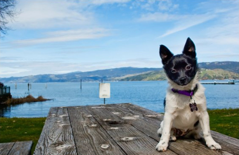 Pets welcome at Edgewater Resort & RV Park.