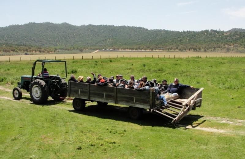 Hayrides at Rankin Ranch.