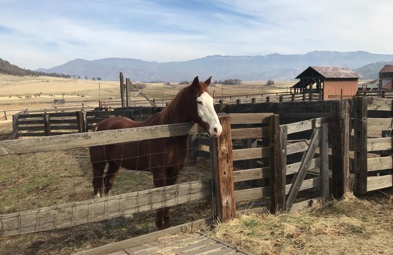 Horse at Rankin Ranch.