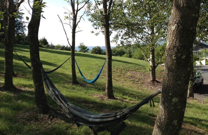 Hammocks at Brierley Hill Bed and Breakfast.
