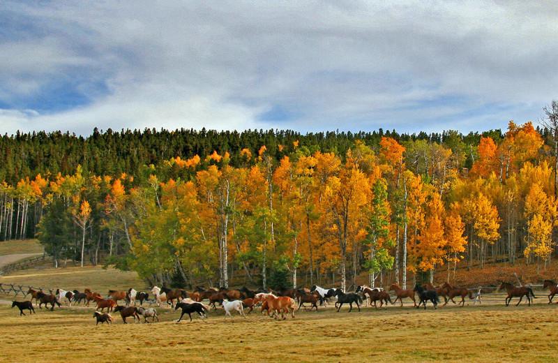Fall at Paradise Guest Ranch.