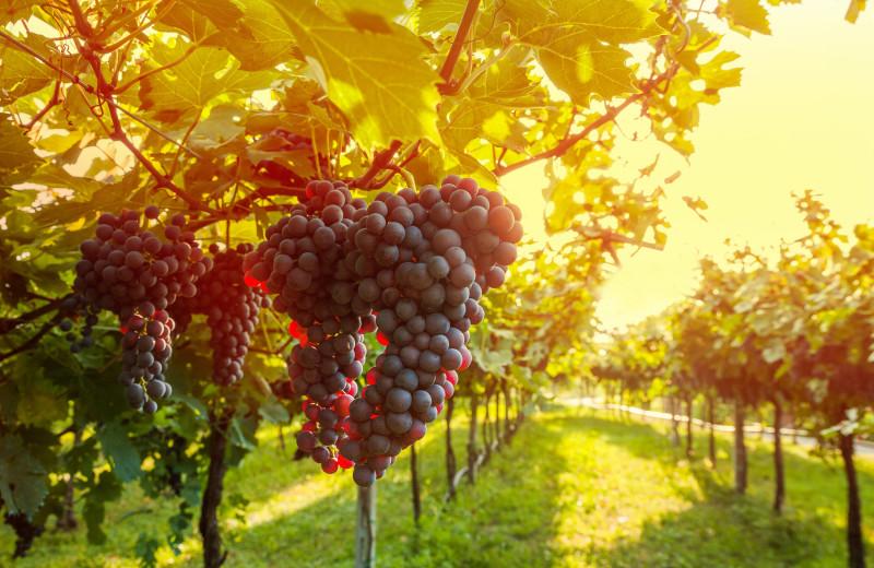 Winery near Woodfield Properties.