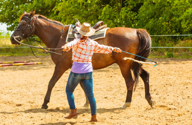 Horse round up at Silver Spur Guest Ranch.