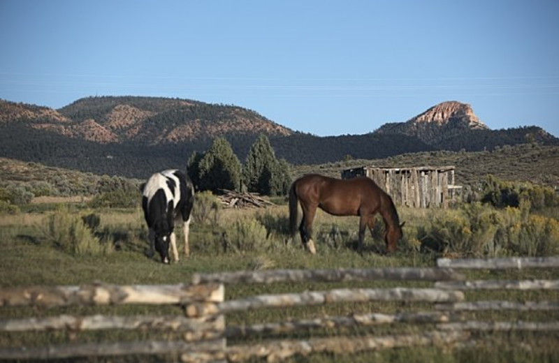 Horses at Cottonwood Meadow Lodge.