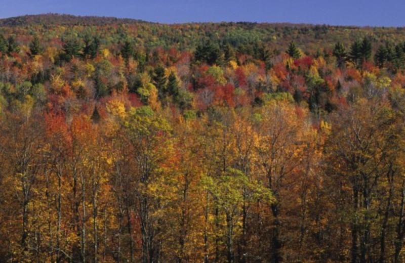 Fall colors at Highridge Condominiums.
