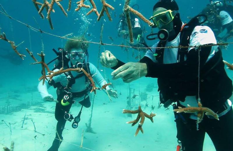 Building coral reef at Rock Reef Resort.