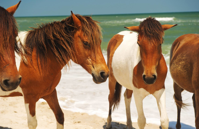 Horses on beach at Central Reservations.