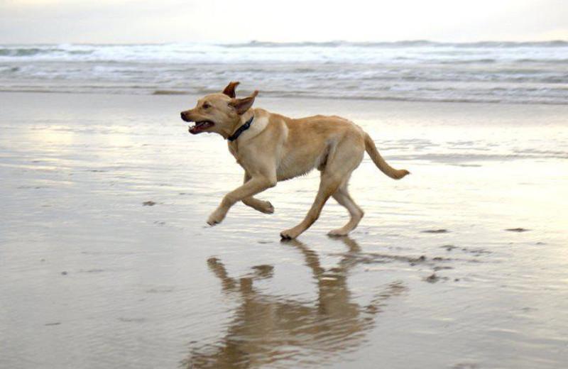 Pet friendly beach at Inn at Cape Kiwanda.