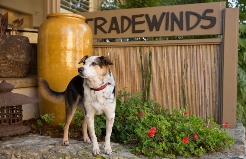 Bring pets up to 70lbs to The Tradewinds at Carmel-by-the-Sea.
