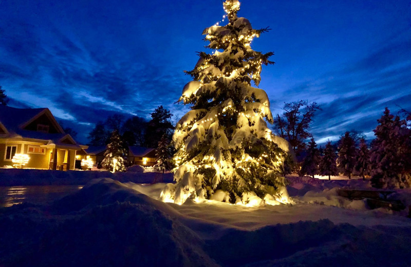 Light up tree at Kavanaugh's Sylvan Lake Resort.