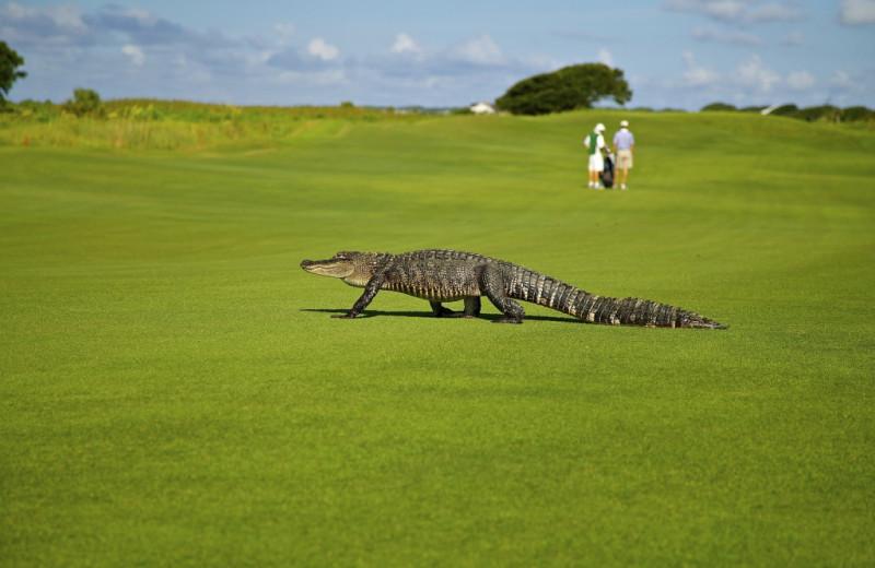 Golf near McMillan Real Estate.