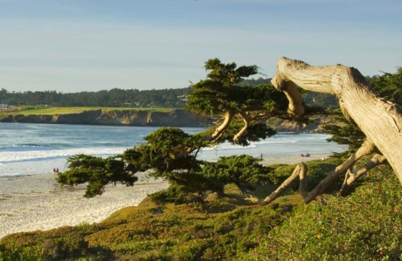 Beach near Old Monterey Inn.