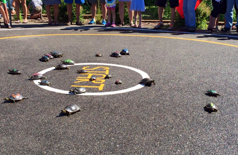 Turtle racing at Boyd Lodge.