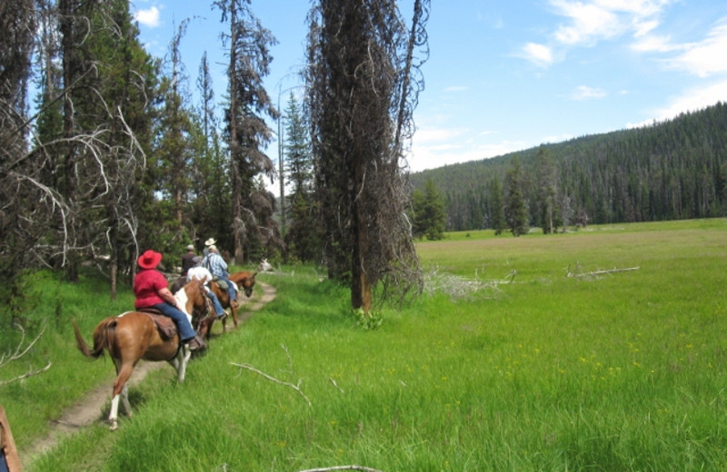 Trail ride at Silver Spur Outfitters.