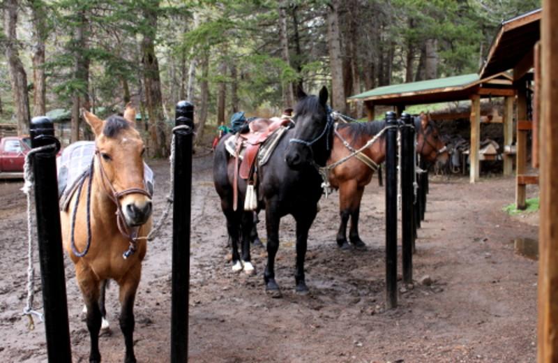 Stables at Bill Cody Ranch