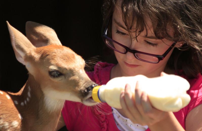 Feeding a fawn milk at Morrell Ranch.