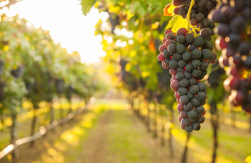 Wineries near Holiday Inn Express
