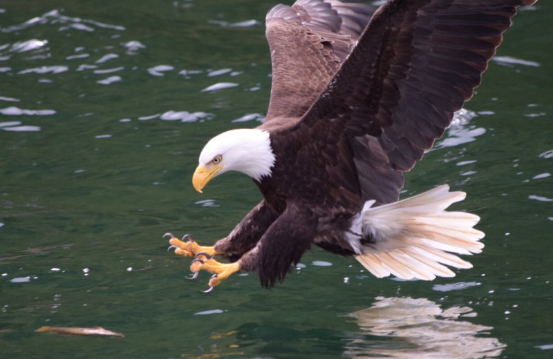 Eagle at Reel Obsession Sport Fishing.