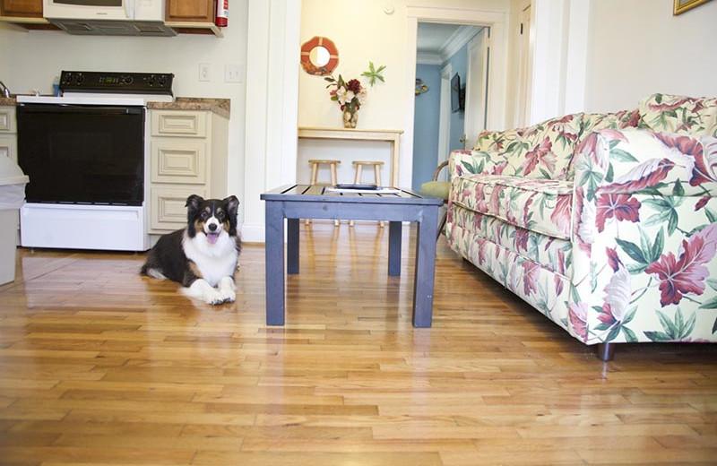 Pets welcome at Carolina Beach Inn.