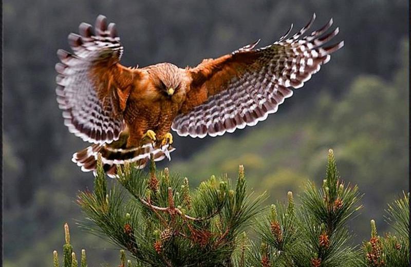 Bird watching at Twin Elm Ranch.