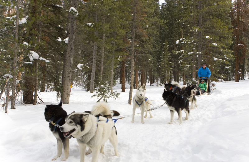 Dog sledding at Grand Timber Lodge.