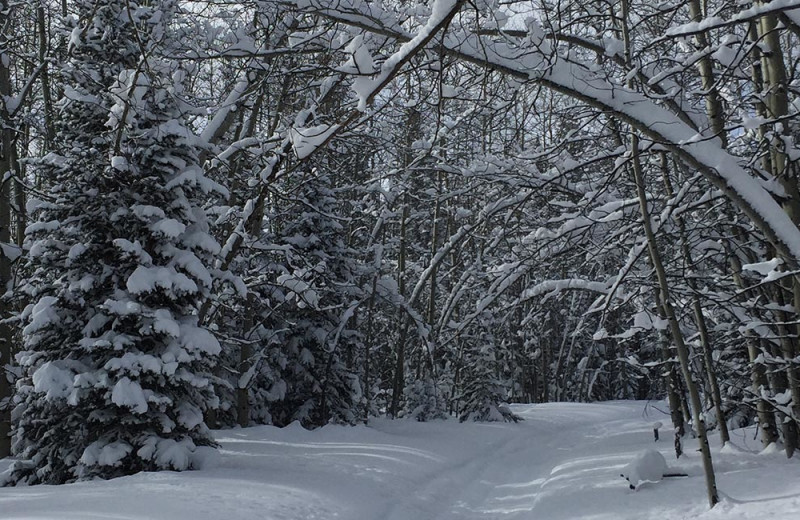 Winter trail at Arrowhead Mountain Lodge.