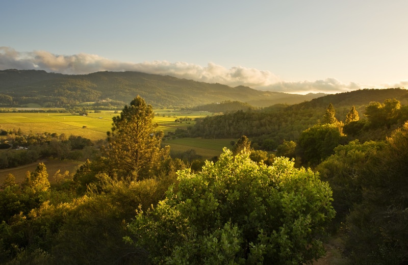 Vineyards at Calistoga Ranch.