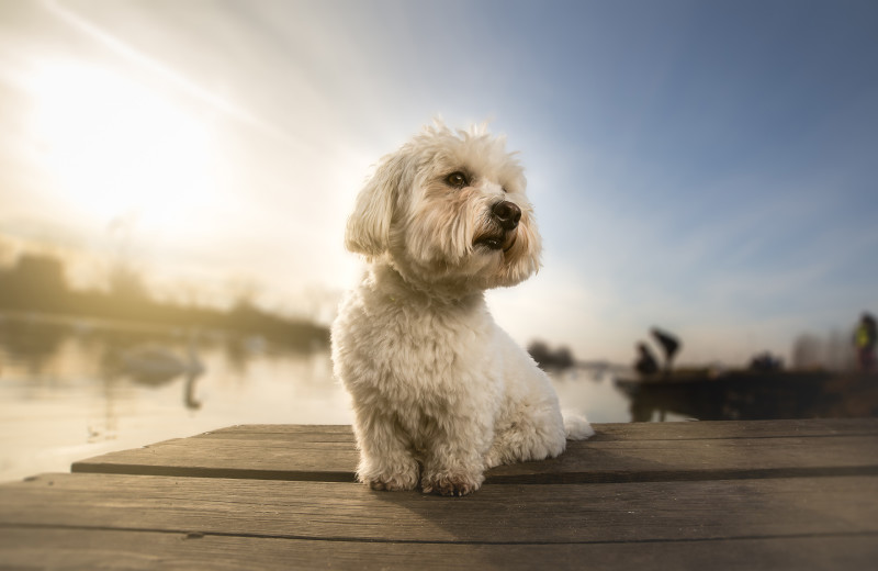 Pets welcome at All-Season Cottage Rentals.