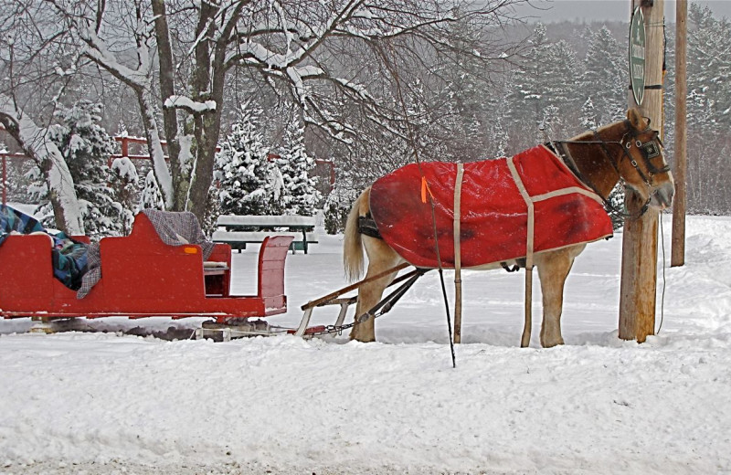 Sleigh rides at Woodwards Resort.