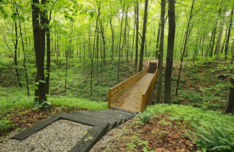 Path at Sojourner's Lodge & Log Cabin Suites.