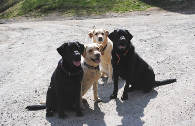 Bring your pets to New England Outdoor Center.
