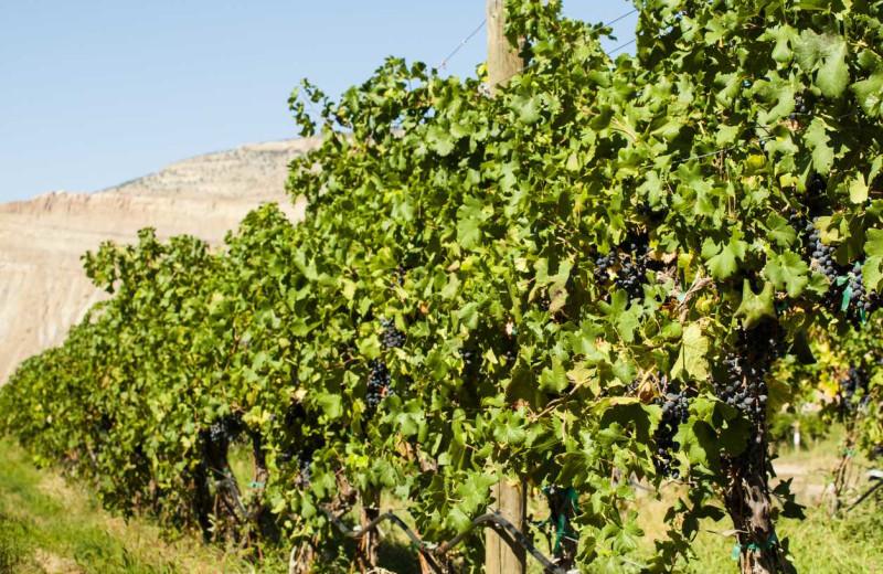 Winery near Best Western Plus Inn of Sedona.