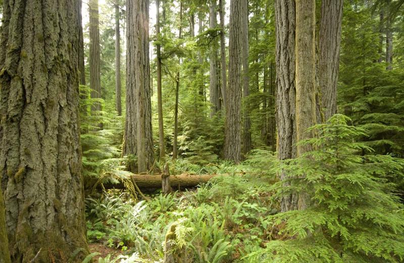 Forest near Sunrise Ridge Waterfront Resort.
