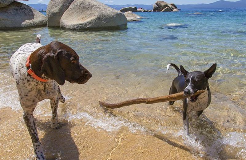 Pets welcome at Tahoe Getaways.