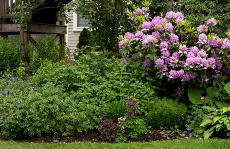 Garden at The Inn at English Meadows.