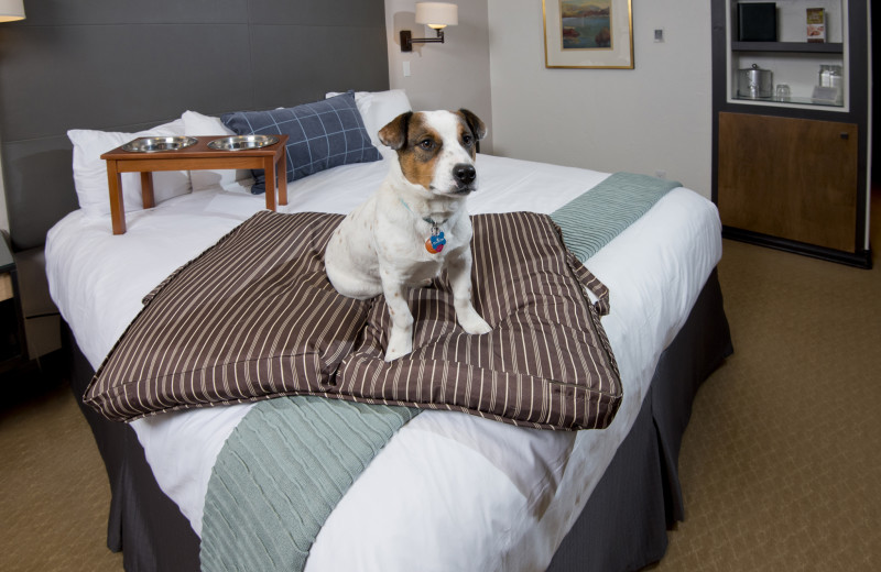 Pets welcome at The Pines Lodge, A RockResort.