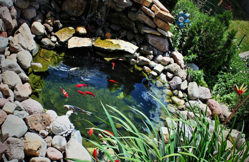 Koi pond at Vail Run Resort.