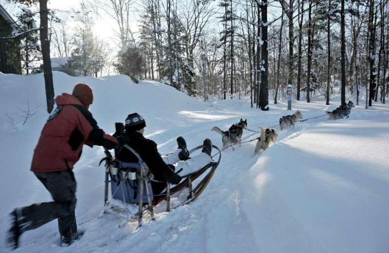 Dog sledding at JW Marriott The Rosseau Muskoka Resort & Spa.