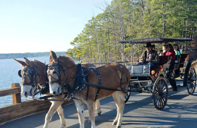 Horse carriage rides at Mountain Harbor Resort & Spa.