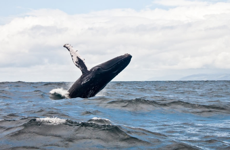 Whale watching at Anchorage Inn.