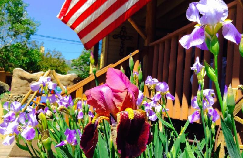 Garden at Misty Mountain Lodge.