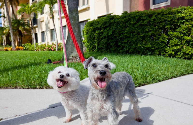 Pets welcome at Staybridge Suites Naples-Gulf Coast.
