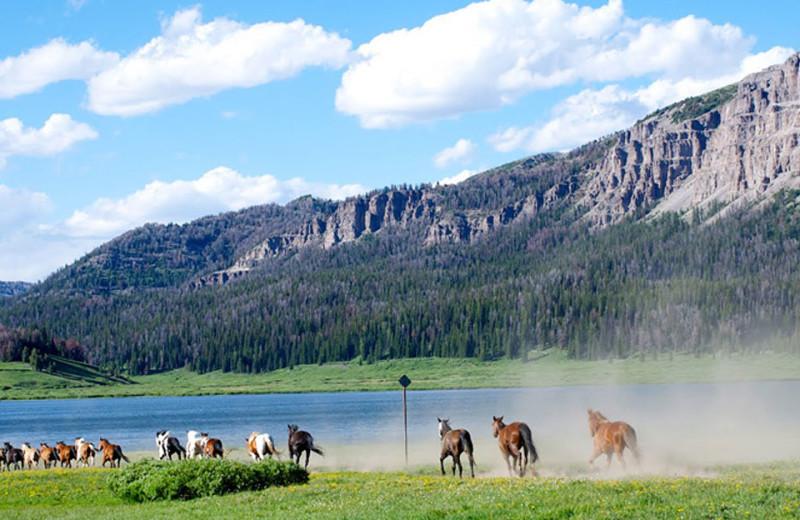 Horses at Brooks Lake Lodge.
