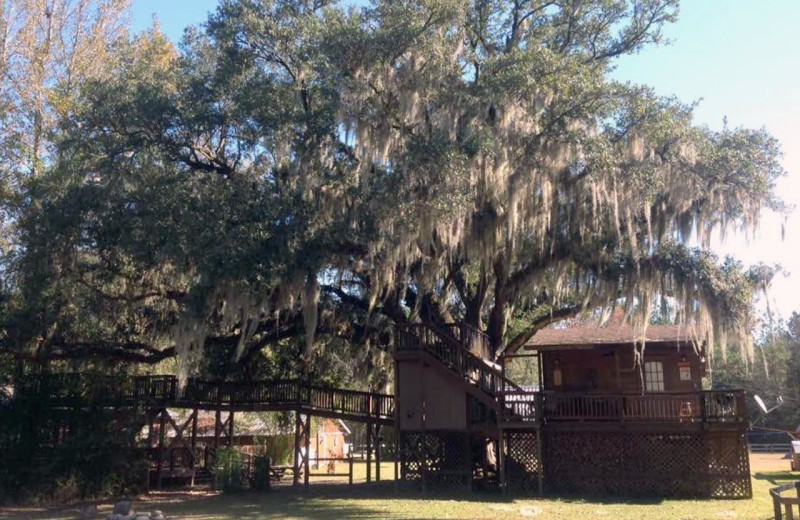 Deck at Berry Creek Cabins.