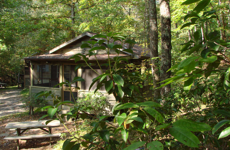 1BR pet-friendly cabin in the woods