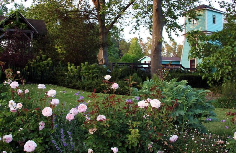 Garden at Case Ranch Inn.