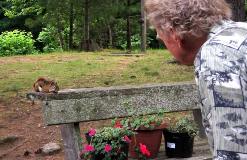 Wildlife at Northland Lodge.